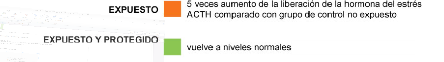 Produccion de ACTH
