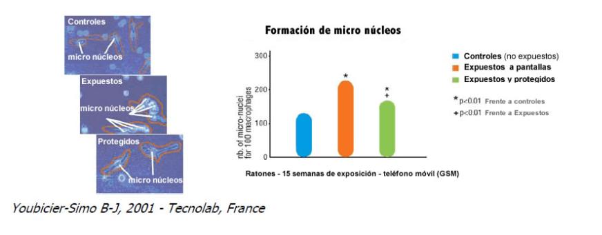 Formacion de micronucleos