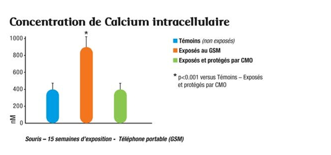 Concentration calcium intracellulaire