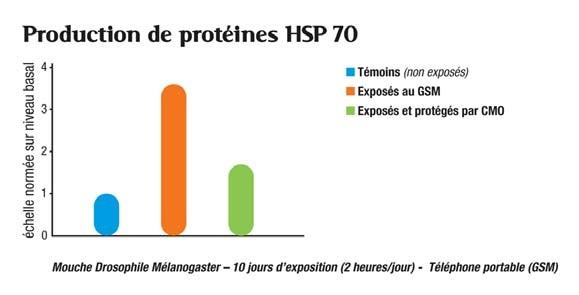 HSP 70