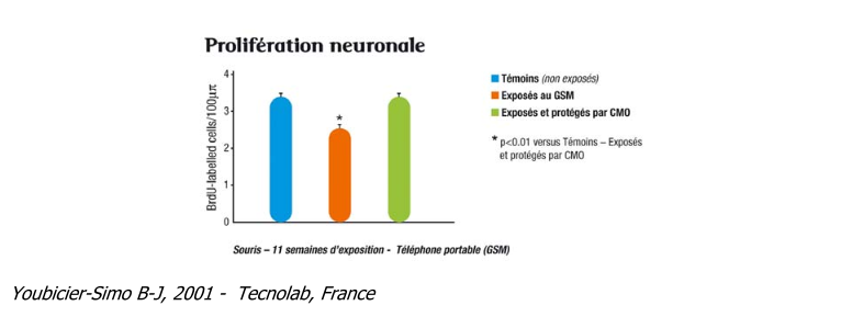 Prolifération neuronale