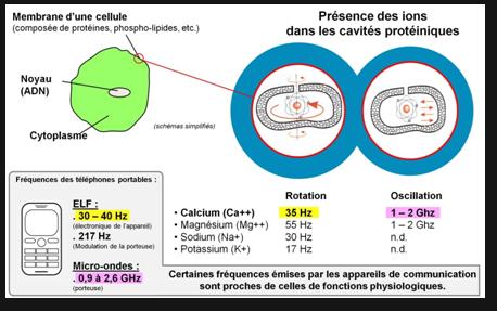 ions dans cavites proteine